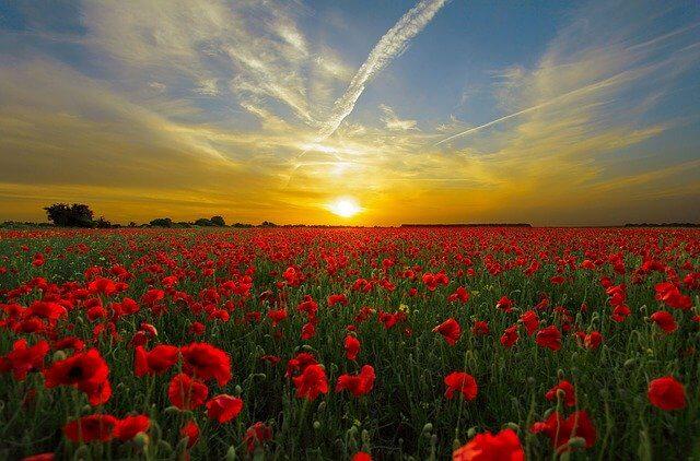 夕陽のふんわりとした香りのイメージ