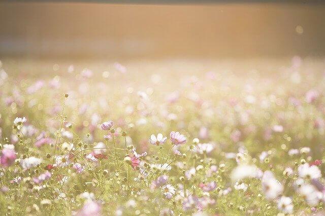 花の香り漂う
